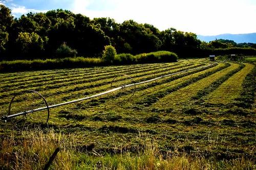 field utah nikon harvest spanishfork alfafa