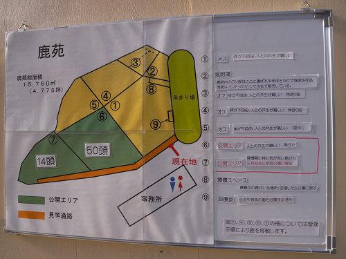 鹿苑「角鹿公開」@奈良公園-05