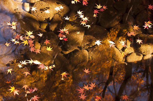leaf peeping