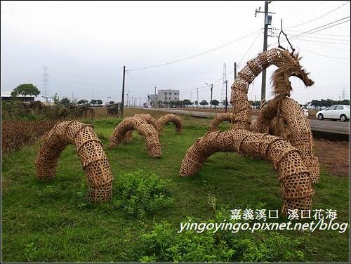 嘉義溪口_溪口花海20121209_R0010799