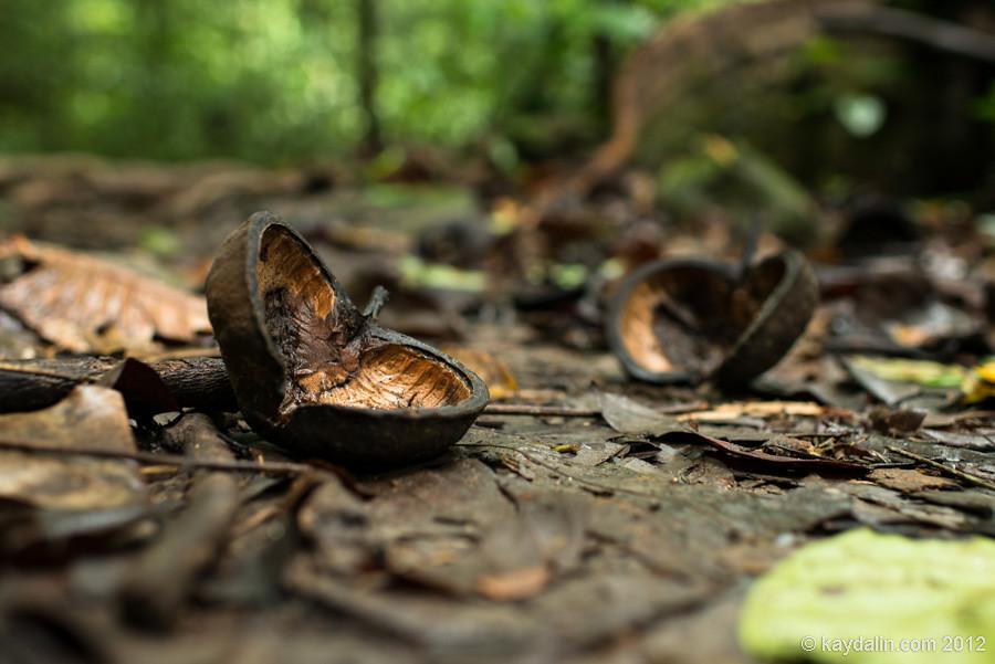национальный парк куба, лес, малайзия