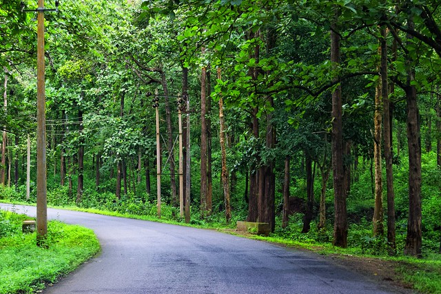 Road Through Nagarhole