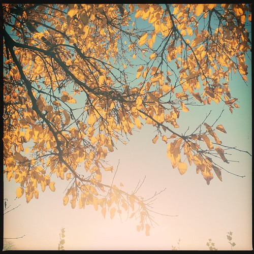 autumn light sky sun tree fall leaves yellow sunrise bluesky goldenhour sunbeams iphone hipstamatic byvanessaray