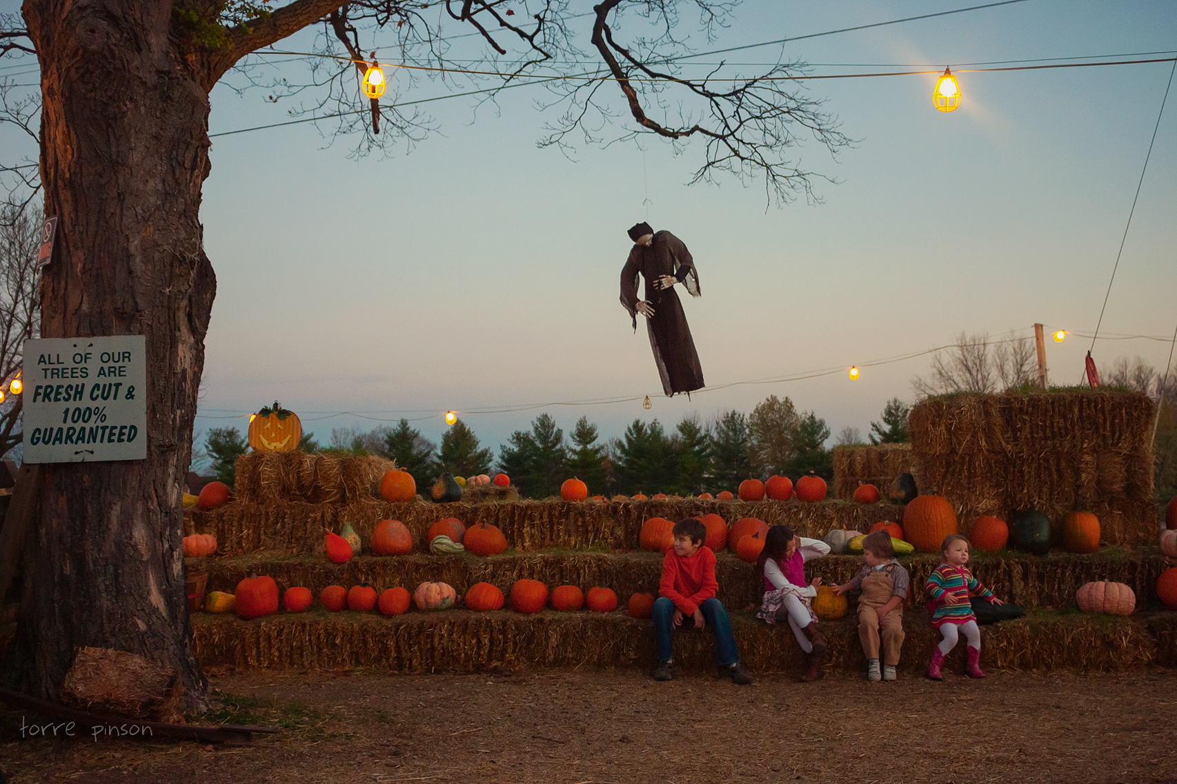 pumpkinpatch.scene.-1
