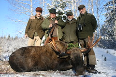 Moose Hunting In Estonia