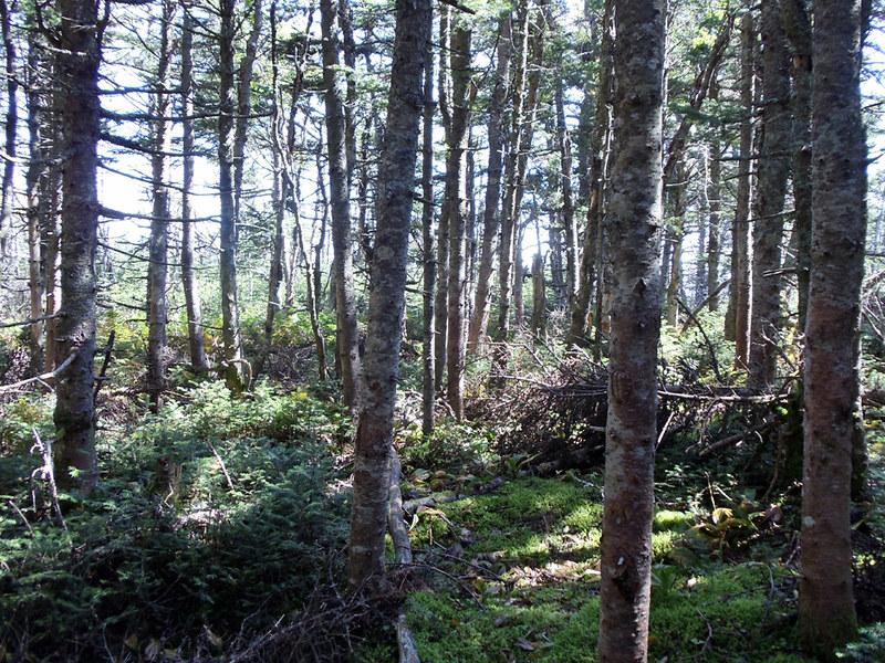 Franconia Ridge Forest