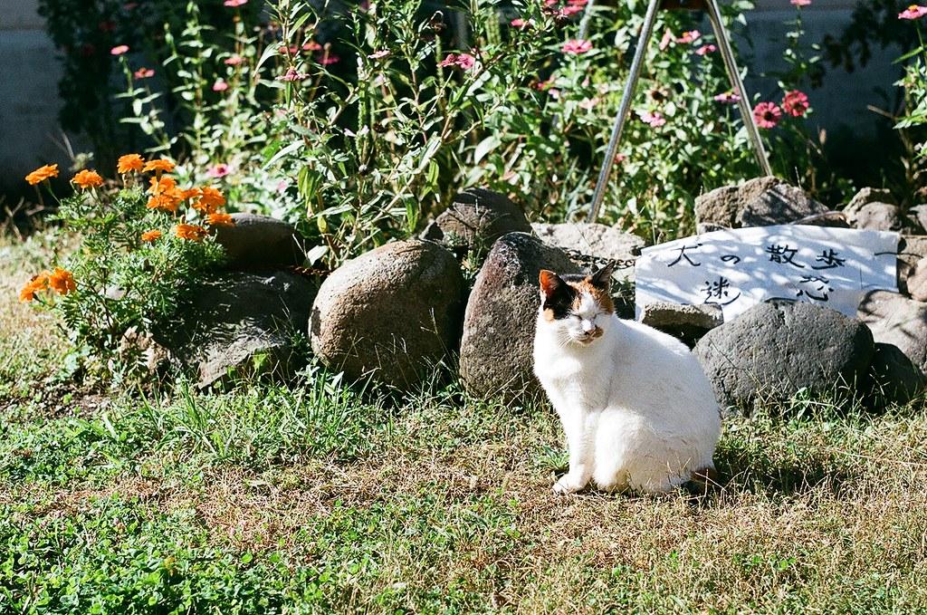 表参道の団地猫