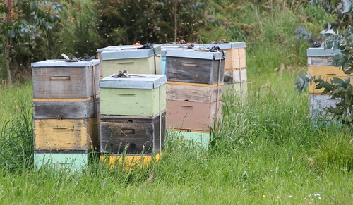 Beehives near Mapua