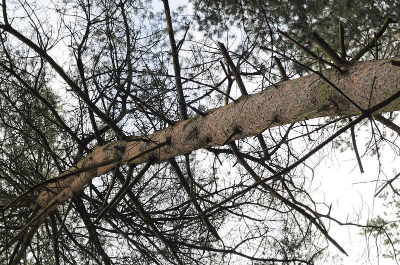 darwin forest 37