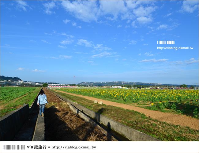 【新社花海2012】2012新社花海節活動介紹及交通資訊8-11