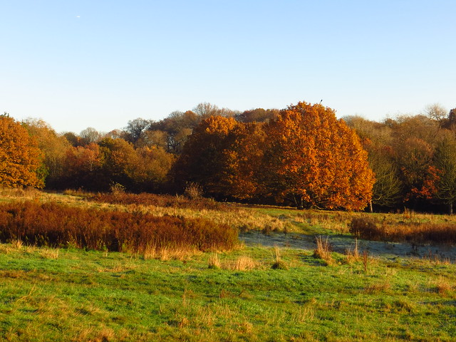 Pryors Field