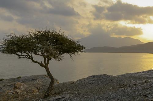 sea beach sunrise desert oman acatia