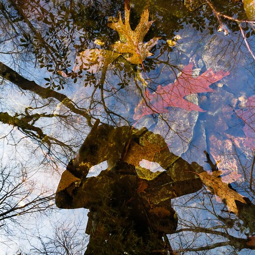 Oak leaves, reflected trees, rocks, and me