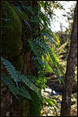 Ferns on the Rocks