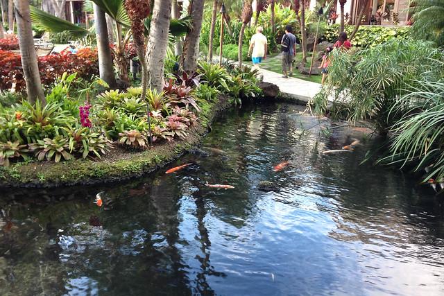 Koi pond hilton hawaiian village koi pond near the pool for Pool of koi