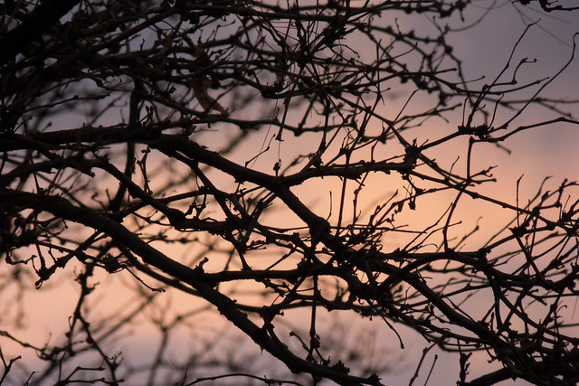 branched sunset