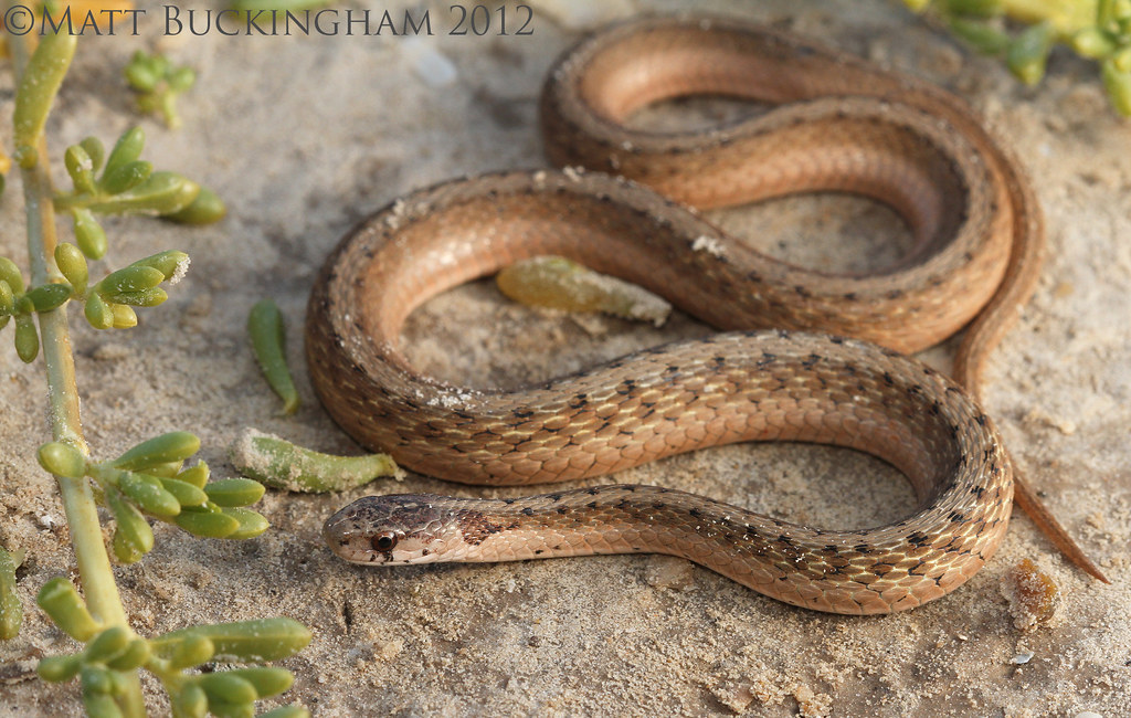 Speed's Dog Blog — Stunning Snakes