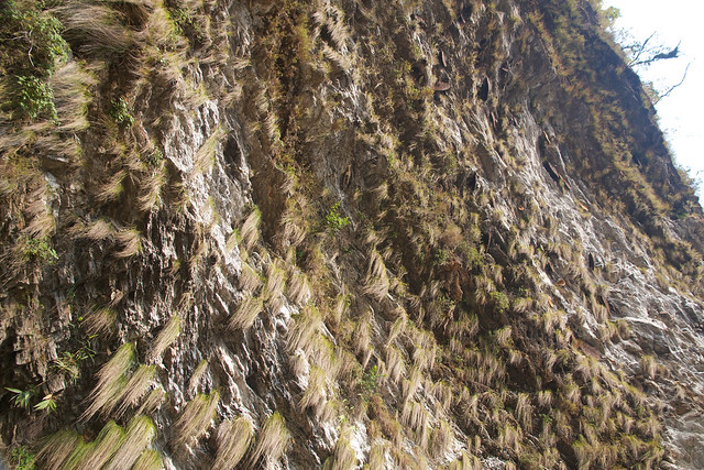 Wild honey bee hives seen a hundred feet up on cliff walls onroute