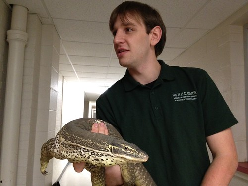 Argus Monitor Lizard, handler Caleb Bruss.