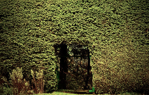 Hedge Hole by petetaylor