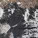 Sharp limestone sculptures - Esculturas de caliza en el paso entre Yutanduchi de Guerrero y San Miguel Piedras, Oaxaca, Mexico por Lon&Queta