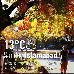 Splash of Autumn Colours | Marvi Rd, Isloo PAK | #weather #sky #instaweather #instaweatherpro #outdoors #nature #islamabad #pakistan #day #autumn #skypainters #Islamabad