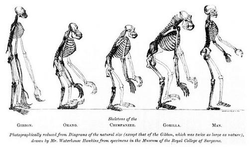 Evolución de los huesos en los primates homínidos