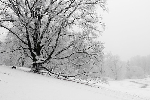 Lonely tree in Goluchow Park