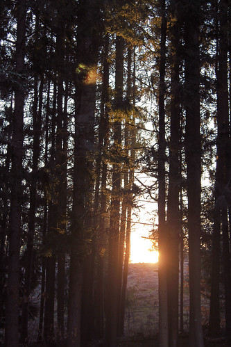 morning nature vertical forest sunrise landscape dawn woods