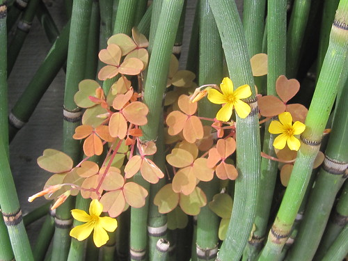 Flowers and Green Stalks