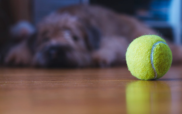 Day 351 - Too Tired to Play