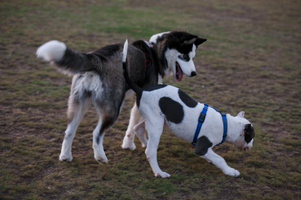 jaxharmon_dogpark_30