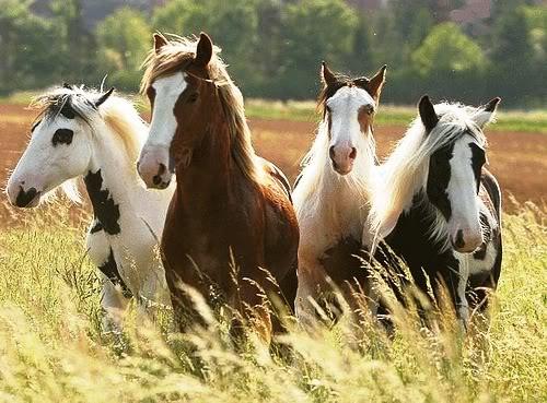 phillipa horses