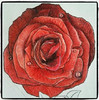 Red Rose A component of