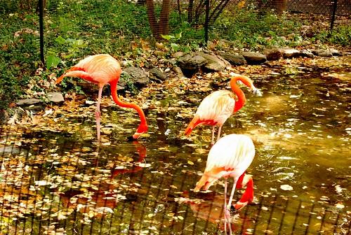PZ - flamingos-001