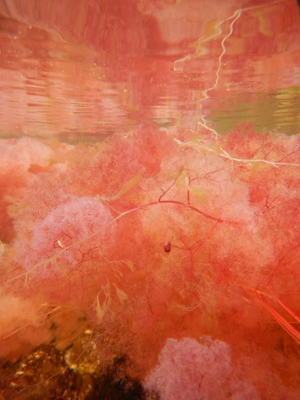 Caño Cristales - Bajo el agua 6