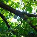 Cacao en los árboles por timetenshi