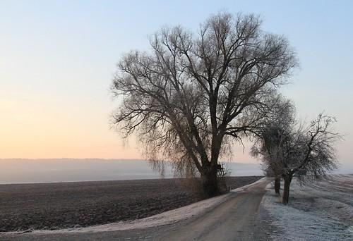 pink mist tree field sunrise germany dawn weide village path hoarfrost bluesky thuringia soil blauerhimmel wintersky willowtree weidenbaum schackendorf rauhreif winterhimmel