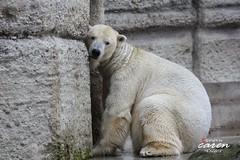 Giovanna&Yoghi - Ein Ruhetag im Eisbärengehege