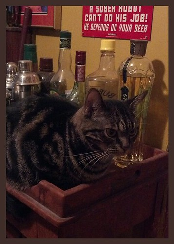 That Poor Man's Cat says it's 5 o'clock somewhere.