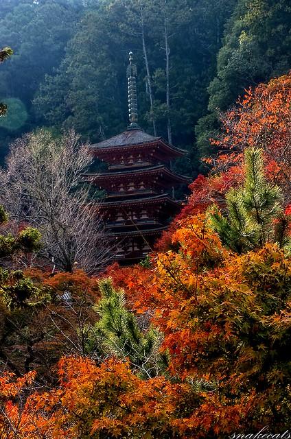 「五重塔」 長谷寺 - 奈良