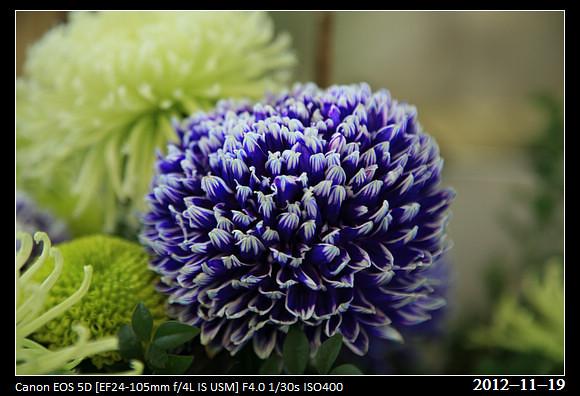 20121119_Flower30