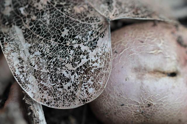 ivy skeleton leaf & mushroom