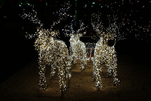 Illuminated Reindeers at George Square, Glasgow