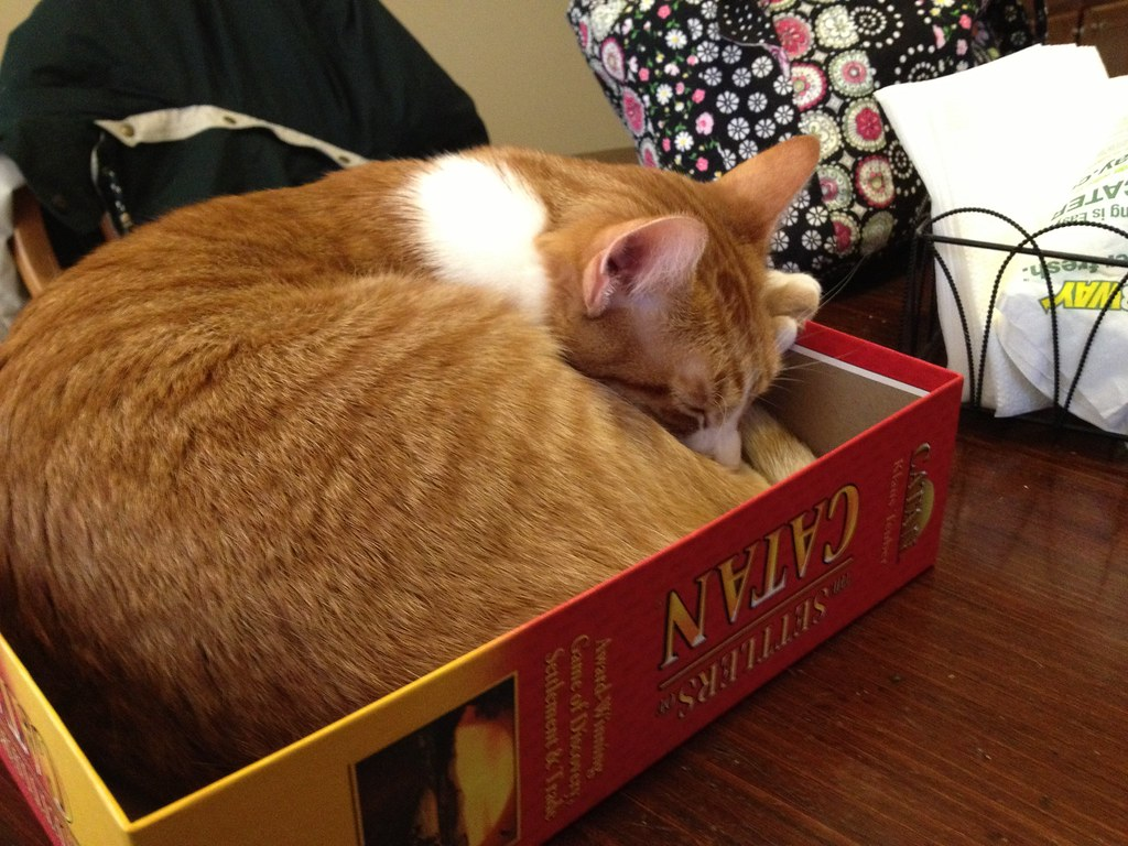A cat sleeping in the lid of the Settlers of Catan game.