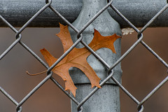 Trapped_49115.jpg by Mully410 * Images