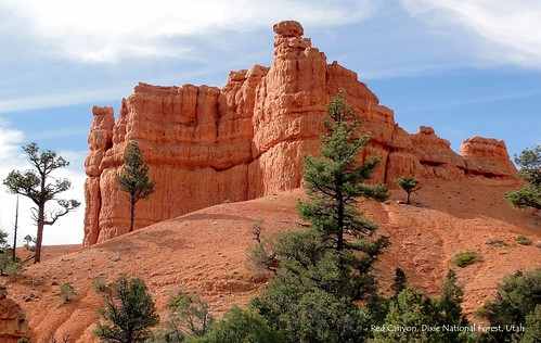 000 Cover - Red Canyon in Dixie National Forest, Utah