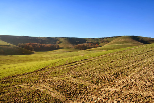 sheep wheat meadows hills fields eastsussex grazing southdowns ploughed planted southdownsway tractortracks folkington larigan phamilton licensedwithgettyimages