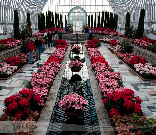 Marjorie Mcneely Conservatory - Como Park - Poinsettia Christmas by !!WaynePhotoGuy