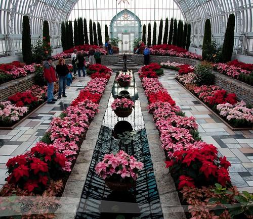 Marjorie Mcneely Conservatory - Como Park - Poinsettia Christmas by !!WaynePhotoGuy